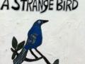 strangebird-copy