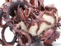 teapot-6-starfish-detial