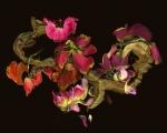 Parrot-tulip-Rockflat