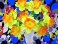 flowersdaffodils1