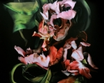 Tulip Rock 1_1_HighRes