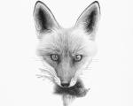 Fox_detail
