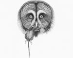 Owl_detail_1